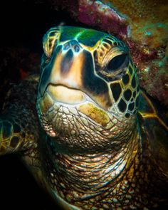 """The Face of Wisdom"" - we all know turtles are my favorite thing, but this caption made me laugh. In my experience they are extremely not smart."