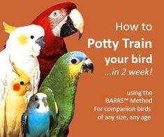 How to Potty Train a Bird #parrotcare