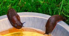 Tipps für den Garten: So wirst du Schnecke, Blattlaus & co. los - Tschüß Ungeziefer!