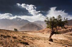 Nepal - Lone trees   Flickr - Photo Sharing!