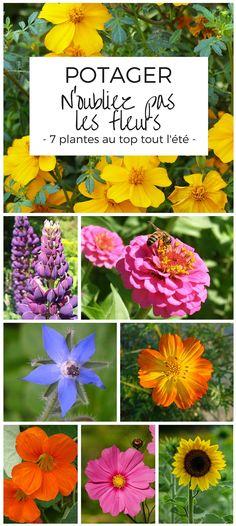 Des fleurs au potager : Oeillet d'Inde - Lupin - Zinnia - Bourrache - Cosmos sulfureux - Capucine - Cosmos bipinnatus - Tournesol