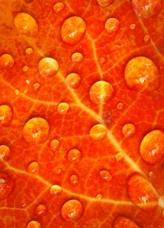 orange.quenalbertini: Orange Leaf and Droplets