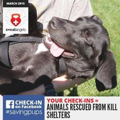 Every Check-In at Kandu Fitness means Kandu Fitness will donate money to an important cause! March 2015 goes to save dogs!