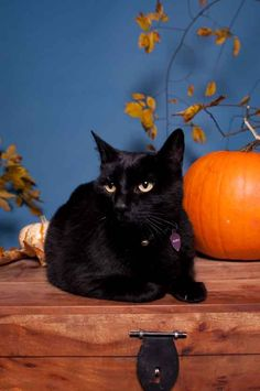 """""""When black cats prowl and pumpkins gleam, luck be yours on Halloween."""" --Author Unknown"""