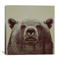 "Brayden Studio Bear II Graphic Art on Wrapped Canvas Size: 18"" H x 18"" W x 0.75"" D"