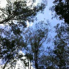 #Gabrielaarroiophotos #nature #trees #sky