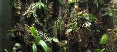 Building a Tall Orchidarium - Pumpkin Beth Misting Nozzles, Automatic Watering System, Egg Crates, Bottle Garden, Terrarium Plants, Self Watering, Outdoor Plants, Plant Care, White Flowers