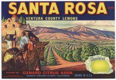 Santa Rosa brand lemons - Oxnard CA
