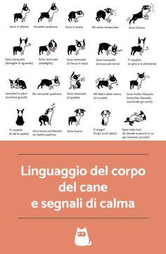 Vorresti capire meglio il tuo cane? Impara a interpretare il linguaggio del corpo del cane e i segnali di calma #cane #cani #linguaggiodelcane #capireilcane #caniadorabili #canisimpatici