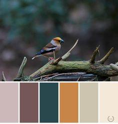 Sprankelende natuur - Januari 2017- 1  In de natuur vind je meestal de mooiste kleuren.  Op deze foto is deze appelvink een goed voorbeeld van de mooie kleuren van de natuur. Deze kleuren kun je combineren in een chic interieur met donkere kleuren op de muren en ook als accessoires, chic gordijnen en kussen, bv. in satijn met de meest sprekende kleuren als accessoires. Je kunt ook de lichte kleuren op de muren en gordijnen gebruiken en als accessoires zoals: kussen, vazen en kaarsen in de…