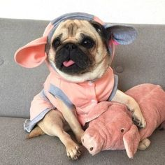 Browse our list of 192 dog breeds to see the per .-Durchsuchen Sie unsere Liste mit 192 Hunderassen, um die perfekte Hunderasse fü… Browse our list of 192 dog breeds to find the perfect dog breed for you. Cute Funny Animals, Cute Baby Animals, Animals And Pets, Cute Pug Puppies, Dogs And Puppies, Bulldog Puppies, Terrier Puppies, Boston Terrier, Baby Pugs