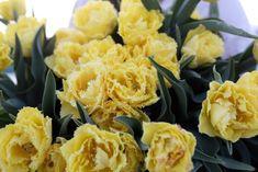Sestřička plnokvěté krasavice Sensual touch. Krásně dlouhé stonky, mentolově zelené listy a na nich elegantní krémově žluté květy. Konce okvětních plátků jsou roztřepené, což dodává mile jemný vzhled. Jedna z nejhezčích novinek sezóny! Macaroni And Cheese, Ethnic Recipes, Dios, Mac And Cheese