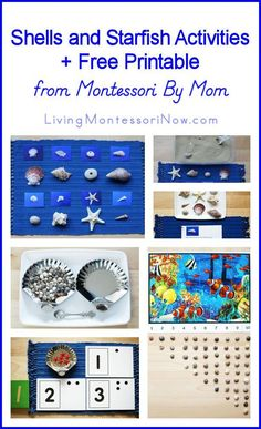 Shells and Starfish Activities + Free Printable from Montessori By Mom . and Montessori-Inspired Ocean Unit Ocean Activities, Music Activities, Montessori Activities, Language Activities, Educational Activities, Preschool Activities, Educational Software, Montessori Classroom, Montessori Toddler