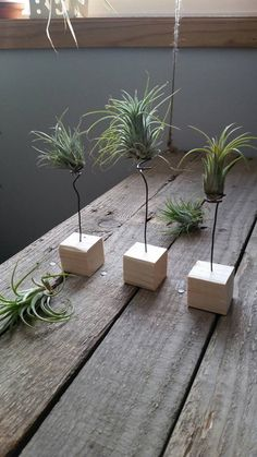 A great little holder for your airplants! Made from a base of 1.5X 1.5 pine, with a 3-4 plated nickel wire spiral to hold the plant. The wire