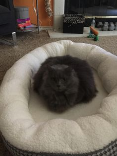 Loafing on the dog's bed