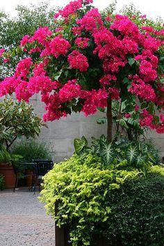 Blooming Crape