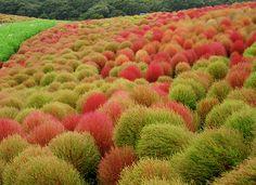 Botanic Notables: Autumn Colors in a Japanese Flower Park | Garden Design