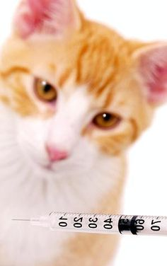 Статья о вакцинации котят: нужно ли делать прививки котятам, когда и какие