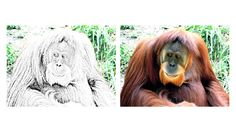 Zoo Animals Lesson Plan: eBook and Activities Zoo Animal Coloring Pages, Increase Memory, Orangutans, Zoo Animals, Activities, Orangutan