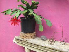 Casa Huaira (Barichara-Colombia) Planter Pots, Cool Stuff, Barichara, Rustic Homes, Country Houses, Colombia