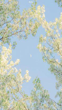 Cherry Blossom, Scenery, World, Chill, Vintage, Art, Art Background, Landscape, Kunst