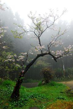 Image de nature, tree, and flowers Beautiful World, Beautiful Places, Beautiful Pictures, Mother Earth, Mother Nature, Rain Gif, I Love Rain, All Nature, Nature Tree