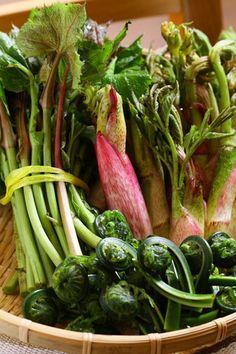 """ふきのとう、こごみ、うどetc...ほろ苦い春の味""""山菜""""料理にトライ ... まだまだ寒い2月ごろからスーパーなどで出回る春の山菜。 その時期しか"""