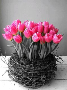 Buy or force bloom some bright flowers to add sunshine to gloomy days Pink Tulips, Tulips Flowers, My Flower, Fresh Flowers, Spring Flowers, Beautiful Flowers, Flower Power, Tulips Garden, Parrot Tulips