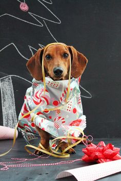 12 Days of Cheer! with Ammo the Dachshund