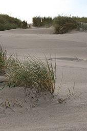 Kystklitter. En klit er i geografi en bakke af sand dannet af vindens bevægelser. Forklit. Forstrand og begyndende klitdannelser. Forklit eller Forstrand og begyndende klitdannelser er en naturtype (nummer 2110) på Naturstyrelsens liste over naturtyper der skal beskyttes, og som danner udpegningsgrundlaget for naturplanerne under Natura 2000-netværket i Danmark. Forklitten er begyndende klitdannelser der dannes ved sandfygning omkring strandvolde og hævede sandflader, længst inde på…