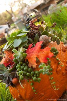 Good Times and Fancy Pumpkins, EcoChic Floral, Austin, TX