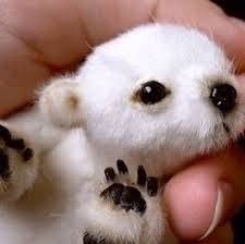 """According to the caption: Usually listed as """"brand new baby polar bear"""" or """"cute polar bear. The truth: It's not a real bear. It's a stuffed bear that you can buy a pattern to make on Etsy. Found in Baby polar bear. Newborn Animals, Cute Baby Animals, Animals And Pets, Funny Animals, Wild Animals, Animals Planet, Animal Babies, Animals Images, Bear Animal"""