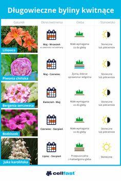 Hunter House, Balcony Garden, Diy And Crafts, Sweet, Nature, Plants, Flowers, Balcony, Garten