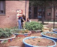 Use kiddy pools to plant your garden. Don't forget to poke holes in the bottom for drainage- my dad used to plant strawberries in our old pools. Urban Agriculture, Urban Farming, Organic Gardening, Gardening Tips, Urban Gardening, Container Plants, Container Gardening, Kiddie Pool, Small Space Gardening