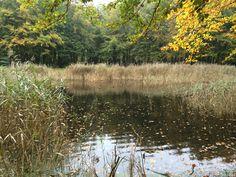 Vijver met grassen en goudgele bladeren