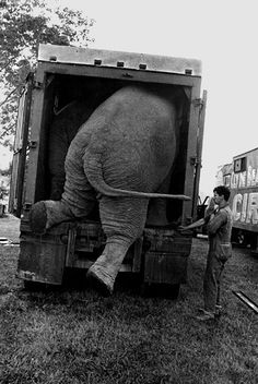 """timelightbox: """" On view at Higher Pictures: Jill Freedman's Circus Days """" In with a borrowed white Volkswagen bus, Jill Freedman joined the Clyde Beatty-Cole Brothers Circus. She was on the move. Mary Ellen Mark, Old Photos, Vintage Photos, Vintage Photographs, Circo Vintage, High Pictures, Retro Pictures, Pose, Big Top"""