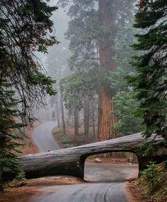 Bike riding through the California Redwoods