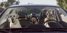 Here's an absolutely hilarious collection of Subaru commercials. The golden toddler in the child's seat is so cute. Now I got to go buy a Subaru! If you love dogs, you will definitely enjoy this vi… Funny Dogs, Cute Dogs, Funny Animals, Cute Animals, Best Dog Breeds, Best Dogs, Dog Test, Clever Dog, Tiny Puppies