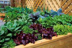 výluhy z rastlín vhodné na hnojenie zeleninových záhonov