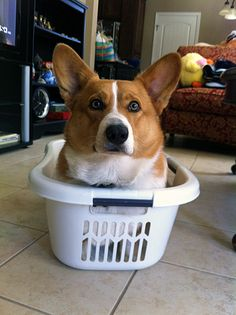 MY laundry basket!