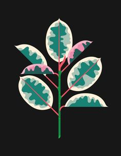 Always With Honor on The Great Discontent (TGD) – Best Garden Plants And Planting Art And Illustration, Illustration Inspiration, Illustrations Posters, Flower Illustrations, The Great Discontent, Illustration Botanique, Gig Poster, Guache, Illustrator Tutorials