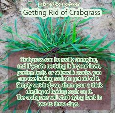 Getting rid of Crabgrass I did this and it works! You can use boiling water with the baking soda to get rid of really bad patches. Garden Weeds, Lawn And Garden, Yard Care, Weed Control, My Secret Garden, Outdoor Projects, Outdoor Decor, Dream Garden, Garden Planning