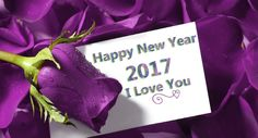 Happy New Year 2017 with purple rose and purple background