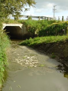 File:Water pollution in the Wairarapa.JPG