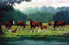 Artist Chris Cummings Unframed Clydesdale Horse Picture Pastoral | WildlifePrints.com