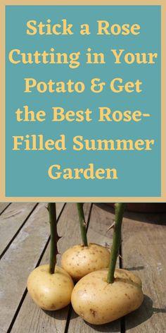 Growing Herbs, Growing Flowers, Growing Vegetables, Vegetables Garden, Autumn Garden, Summer Garden, Rain Garden, Garden Art, Garden Plants