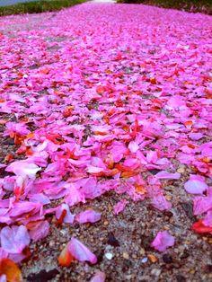 Petals over floor