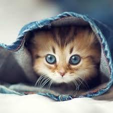 katter - Sök på Google