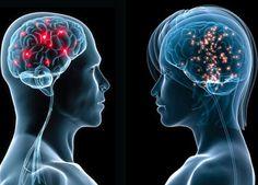 脳の「回路」は男女でここまで違った…米大学が可視化に成功  >男性では脳の前後を接続するネットワークが多く見られたのに対し、女性では大部分が右脳と左脳を接続するネットワークとなっており、両者の間には神経走行のレベルでも顕著な違いが見られた  >女性の脳では、脳の右半球と左半球をつなぐ「脳梁」という部分が男性に比べて太いことが解剖学的に知られていましたが、今回得られたマップを見てみると、大脳皮質においても左右を横断する太いネットワークが形成されていることが見てとれます。