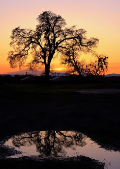 Sentinel Oak. This central California valley oak tree is an iconic image of the farmland. It changes through the seasons... so more images to come...